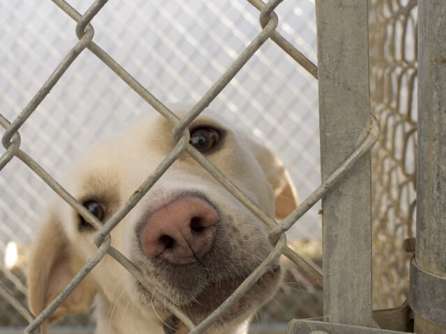 https://hunterspetsitting.com/wp-content/uploads/2020/09/Dog_in_animal_shelter_in_Washington_Iowa-640x480.jpg